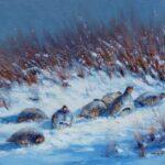 Rebhuehner im Schnee